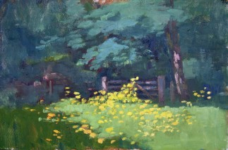 Buttercups at Princes Wood