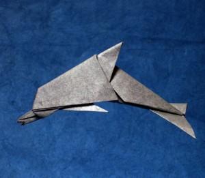 Jamie's Dolphin