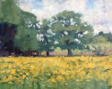 Buttercups oak