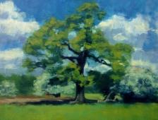 May oak