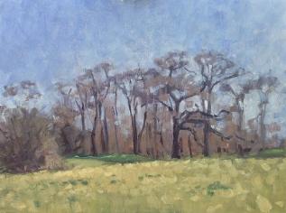 Spring trees, PrincesWood