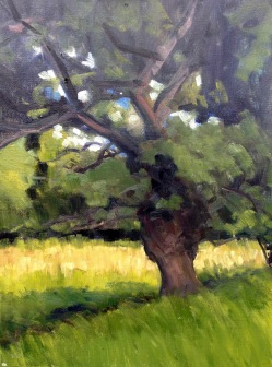 Big oak