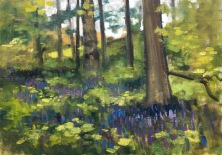 Bluebells PW 2017