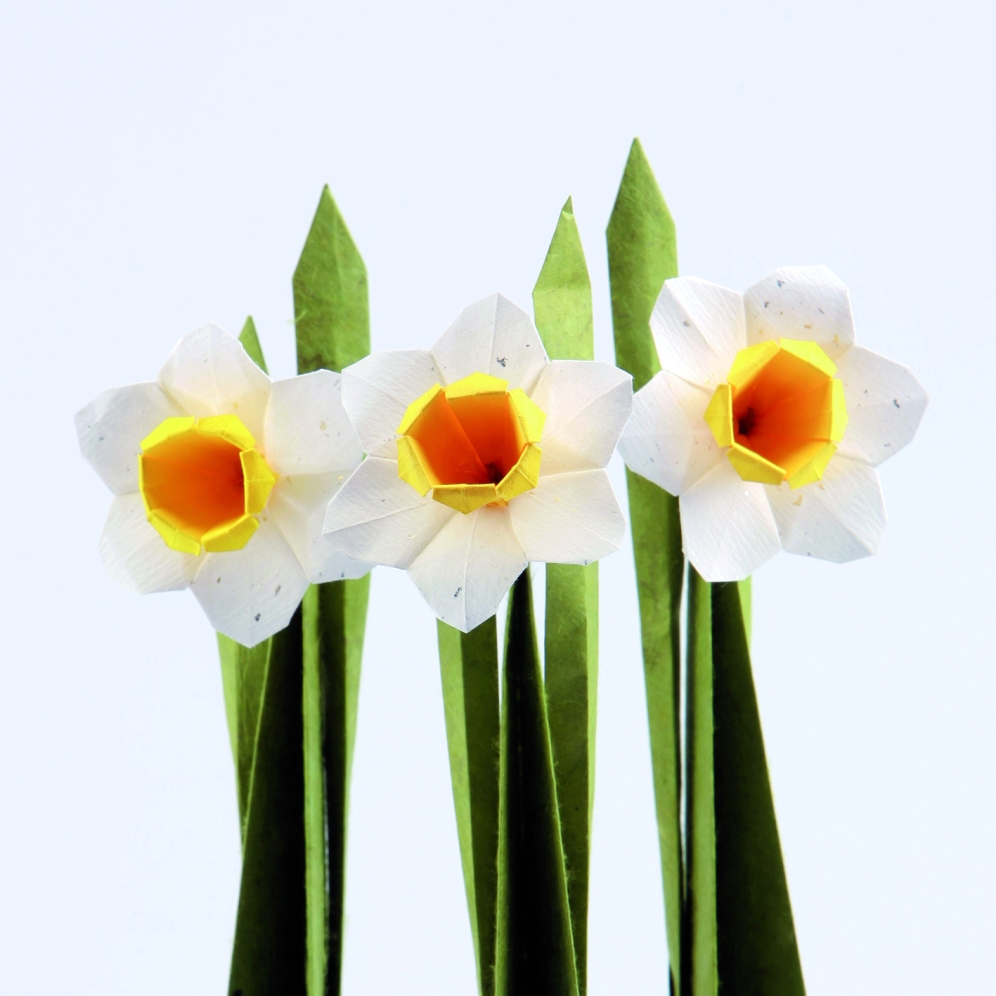 Daffodil by Assia Brill Diagrams: https://vallebird.files.wordpress.com/2018/02/daffodil1.pdf