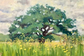 Oak, buttercups